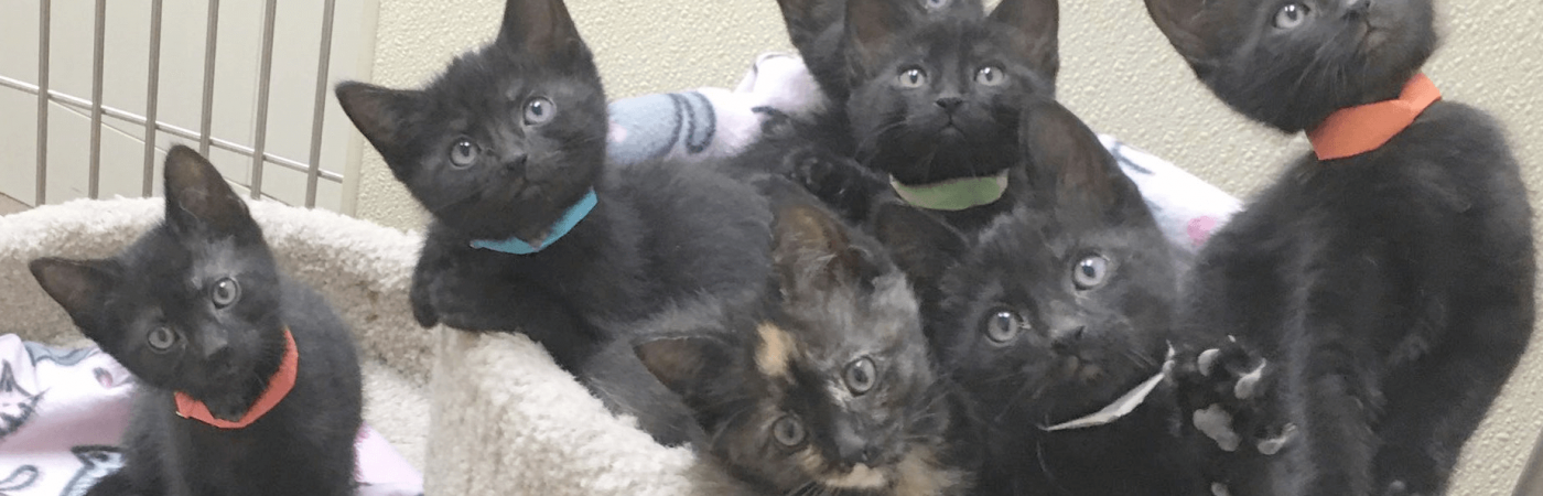Rescue Kittens.opt